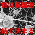 ニューロン,,シナプス,