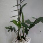 院内,観葉植物,